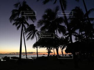 ヤシの木とビーチの写真・画像素材[1711477]