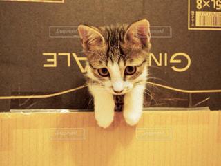 猫,動物,にゃんこ,かわいい,猫じゃらし,仔猫,かくれんぼ,キジトラ,にゃー,遊ぼう