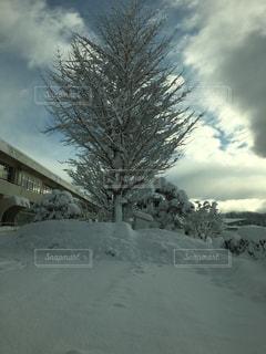 雪の写真・画像素材[340780]