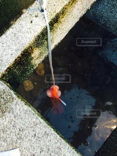 温泉の写真・画像素材[343077]