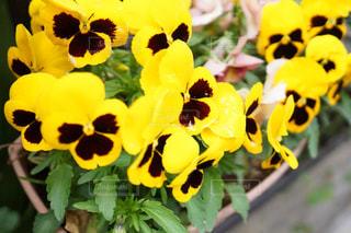 花の写真・画像素材[340432]