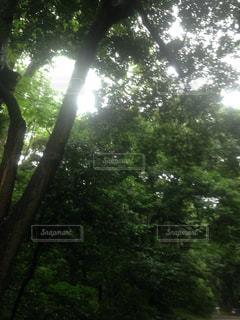 公園の写真・画像素材[341215]