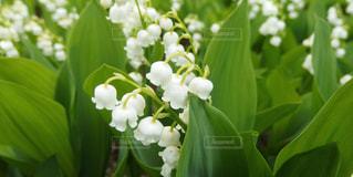花の写真・画像素材[341771]