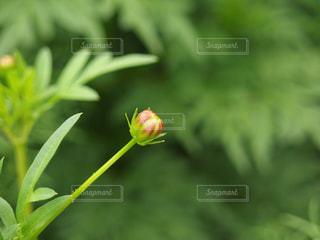 花の写真・画像素材[341772]