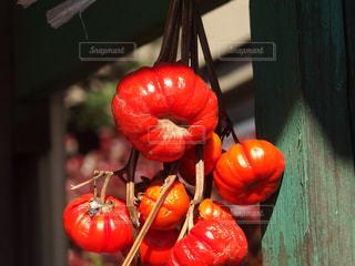秋の写真・画像素材[341774]