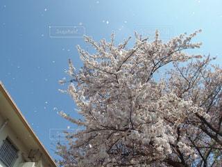 空の写真・画像素材[342675]