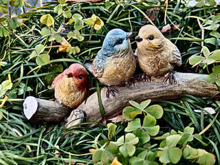 鳥の写真・画像素材[343813]