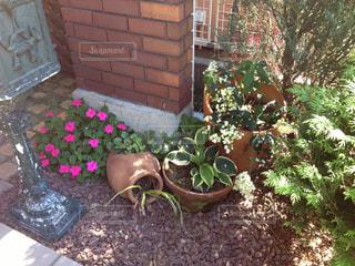 庭の写真・画像素材[340616]