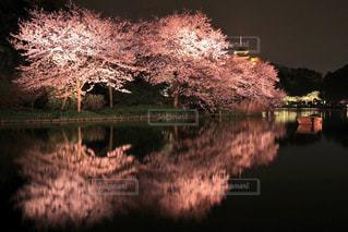 桜の写真・画像素材[340907]