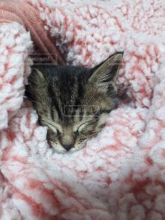 ベッドの上で横になっている猫の写真・画像素材[1819011]