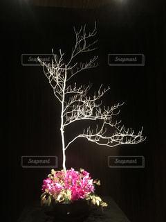 花 アート フラワーの写真・画像素材[341074]