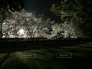 No.341453 桜