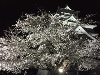 No.341454 桜
