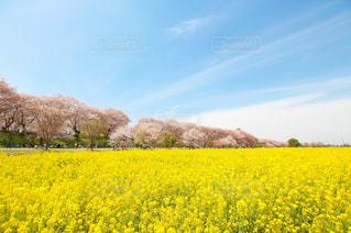 花の写真・画像素材[379401]