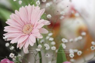 花の写真・画像素材[379853]