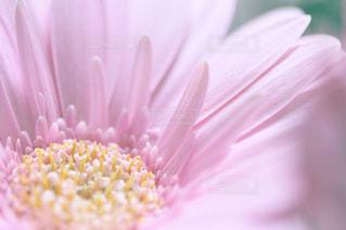 花の写真・画像素材[379922]
