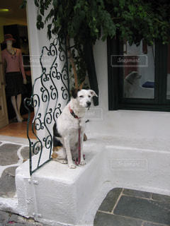 犬の写真・画像素材[343574]