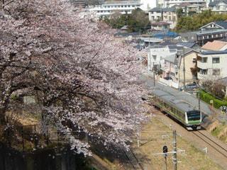 春の写真・画像素材[345511]
