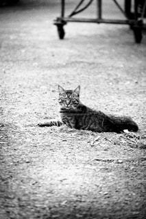 猫 - No.356583