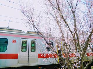 桜の写真・画像素材[361556]
