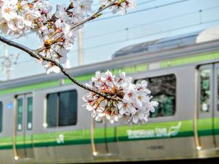 春の写真・画像素材[372202]