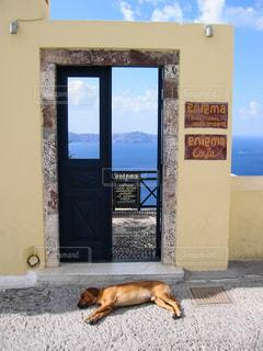 犬の写真・画像素材[373013]