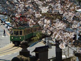 桜の写真・画像素材[432264]