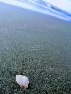 ビーチの写真・画像素材[434363]