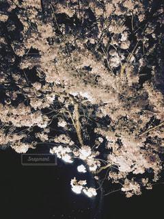 風景 - No.435523