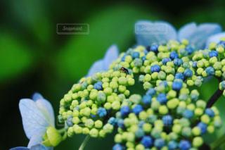 自然の写真・画像素材[533545]