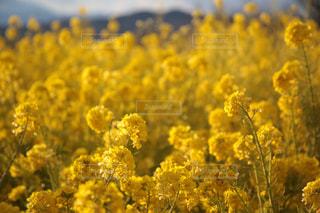 花の写真・画像素材[341940]