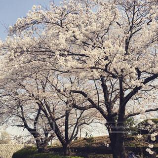 春の写真・画像素材[380452]