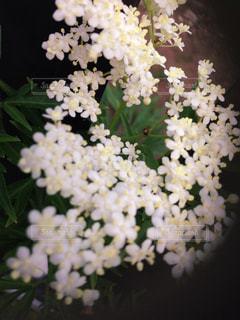 庭の写真・画像素材[342050]
