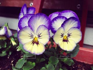 花の写真・画像素材[342124]