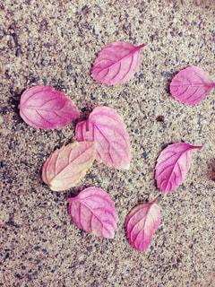 秋の写真・画像素材[342130]
