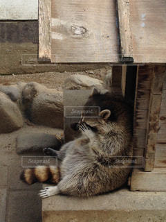 動物の写真・画像素材[342139]