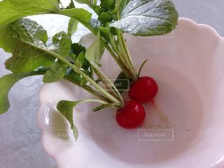 野菜の写真・画像素材[342141]