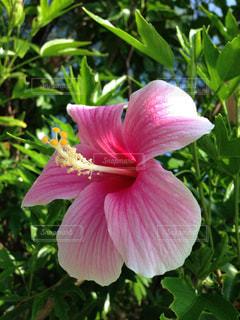 花の写真・画像素材[342449]