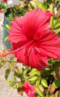花の写真・画像素材[342470]