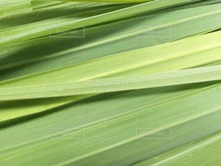 緑の写真・画像素材[342564]