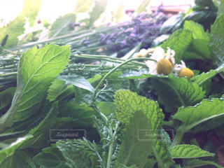 花の写真・画像素材[342623]