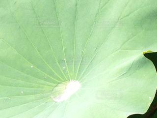緑の写真・画像素材[345598]