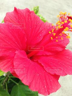 花の写真・画像素材[345600]