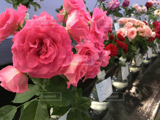 花の写真・画像素材[487432]