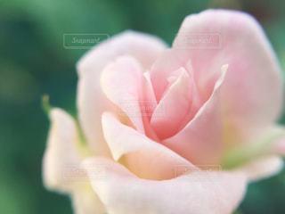 花の写真・画像素材[662470]