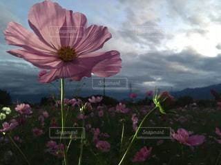 植物にピンクの花の写真・画像素材[792452]