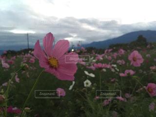 植物にピンクの花の写真・画像素材[792453]