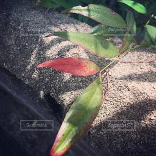自然の写真・画像素材[497776]