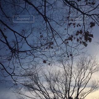 自然の写真・画像素材[498130]