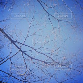 自然の写真・画像素材[498332]